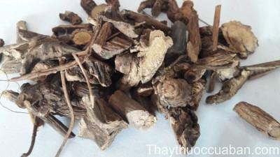 Hình ảnh rễ cây gai, trữ ma