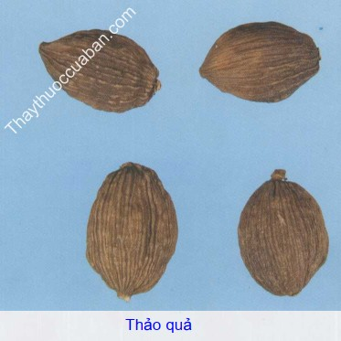 Hình ảnh vị thuốc thảo quả, thảo quả