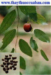 Táo nhân, hình ảnh cây táo